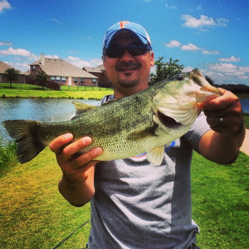 Bluegill Bass2 (2)